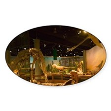 Drumheller: Royal Tyrrell Museum of Decal