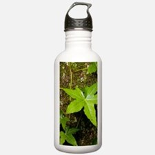 with English ivy Water Bottle