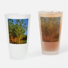 Quaking Aspen Grove along the Rocky Drinking Glass