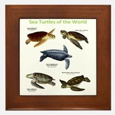 Sea Turtles of the World Framed Tile