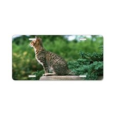 cat on the lookout Lt Aluminum License Plate