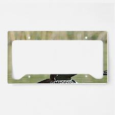 Lac Le Jeune. Common Loon (Ga License Plate Holder