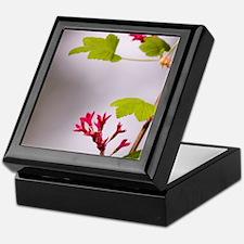 Red-flowering currant, Ribes sanguine Keepsake Box