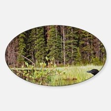 Common Loon (Gavia immer) on nest i Decal