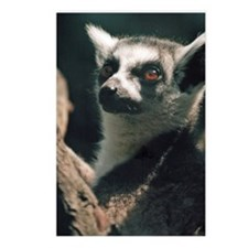 Ring Tailed Lemur Postcards (Package of 8)