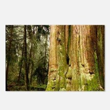 British Columbia, Thuja p Postcards (Package of 8)