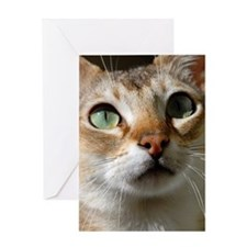 dsh930a Greeting Card