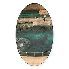 Deep Sea Adventure /Dolphin Show (N Decal
