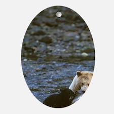 black bear Oval Ornament