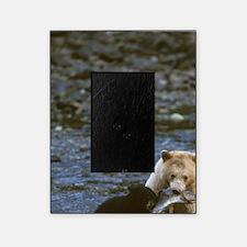 black bear Picture Frame