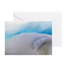 Gulf of St. Lawrence. Harp Seal (pho Greeting Card
