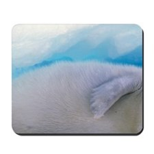 Gulf of St. Lawrence. Harp Seal (phoca g Mousepad