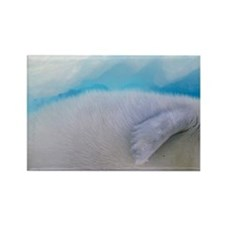 Gulf of St. Lawrence. Harp Seal ( Rectangle Magnet