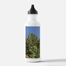 Day Lodge of Sechart W Water Bottle