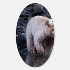 black bear Sticker (Oval)