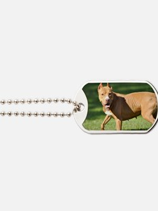 Carmen Dog Tags