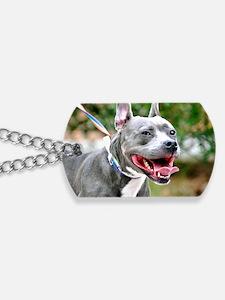 Bella Dog Tags