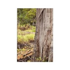 Cedar tree in lakeada, Queen Char Rectangle Magnet