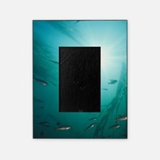 Juvenile Copper Rockfish hiding amon Picture Frame