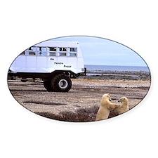 Polar Bears playing next to Tundra  Decal