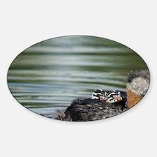 Logan Lake. Red-necked Grebe (Podic Decal