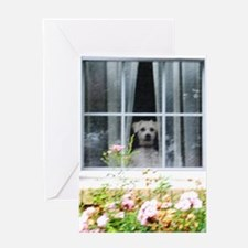Zak in the windowA Greeting Card
