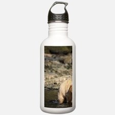 black bear Water Bottle