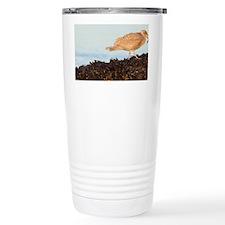 Gull feeding on purple sea star Travel Mug