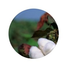 """Cotton ready for harvest. 3.5"""" Button"""