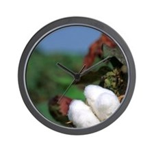 Cotton ready for harvest. Wall Clock