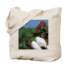 Cotton ready for harvest. Tote Bag