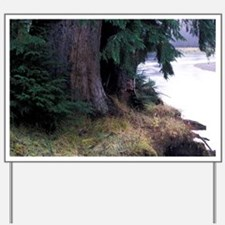 Queen Charlotte Islands. Yakoun Riverott Yard Sign