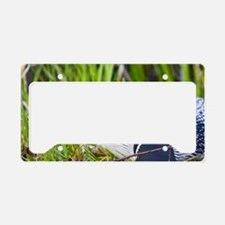Common Loon (Gavia immer) on  License Plate Holder