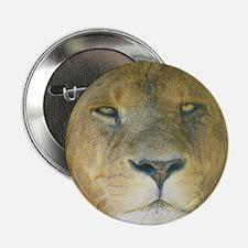 """Lion square 2.25"""" Button"""