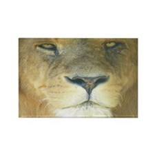 Lion Lposter Rectangle Magnet