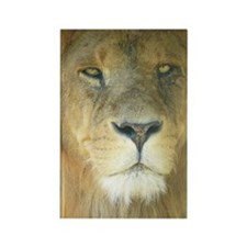 Lion iphone Rectangle Magnet