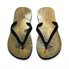 Lion pposter Flip Flops