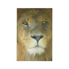 Lion pposter Rectangle Magnet