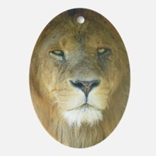 Lion pposter Oval Ornament