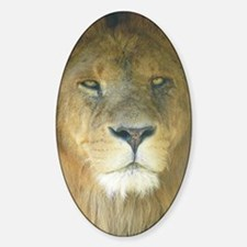 Lion pposter Sticker (Oval)