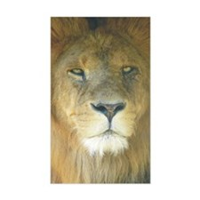 Lion pposter Decal