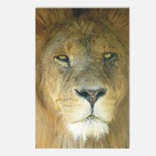 Lion journal Postcards (Package of 8)