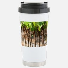 Young vines in a row closely pl Travel Mug