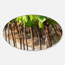Young vines in a row closely plante Decal