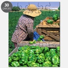Green bell peppers being harvested. Puzzle