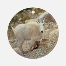 The goat antelope is more commonly  Round Ornament