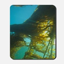 Giant Kelp (Macrocystis integrefolia), B Mousepad