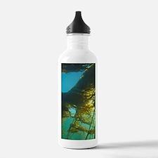 Giant Kelp (Macrocysti Water Bottle