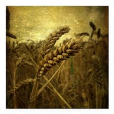 "Wheat Field Square Car Magnet 3"" x 3"""