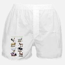 Domestic Farm Animals Boxer Shorts